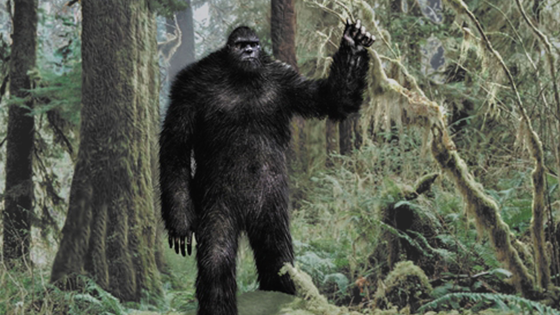 Big Foot High Quality Background on Wallpapers Vista