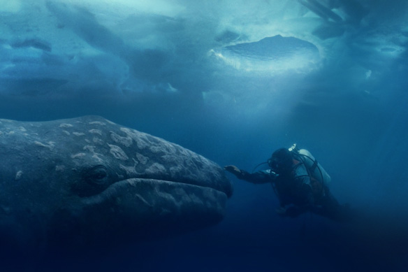 HQ Big Miracle Wallpapers | File 41.68Kb