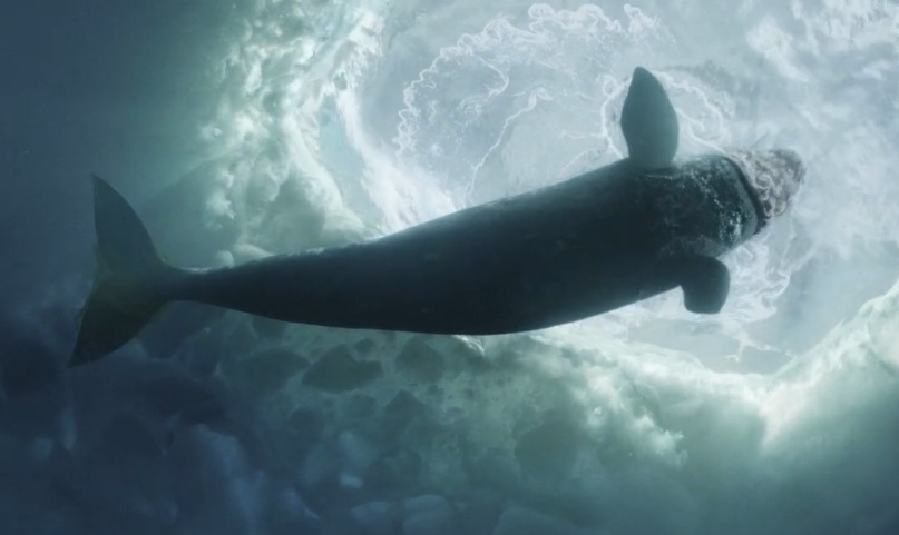 Big Miracle Backgrounds on Wallpapers Vista