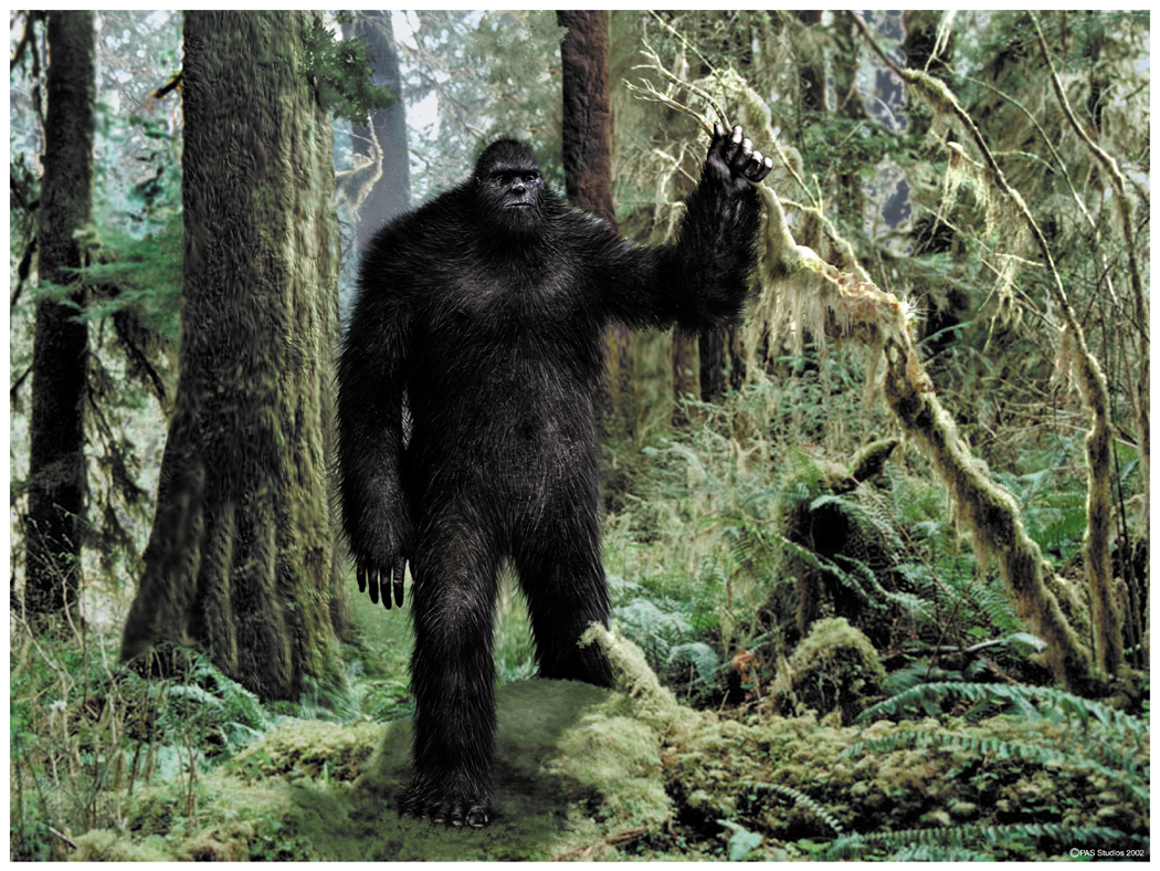 Images of Bigfoot | 1050x788