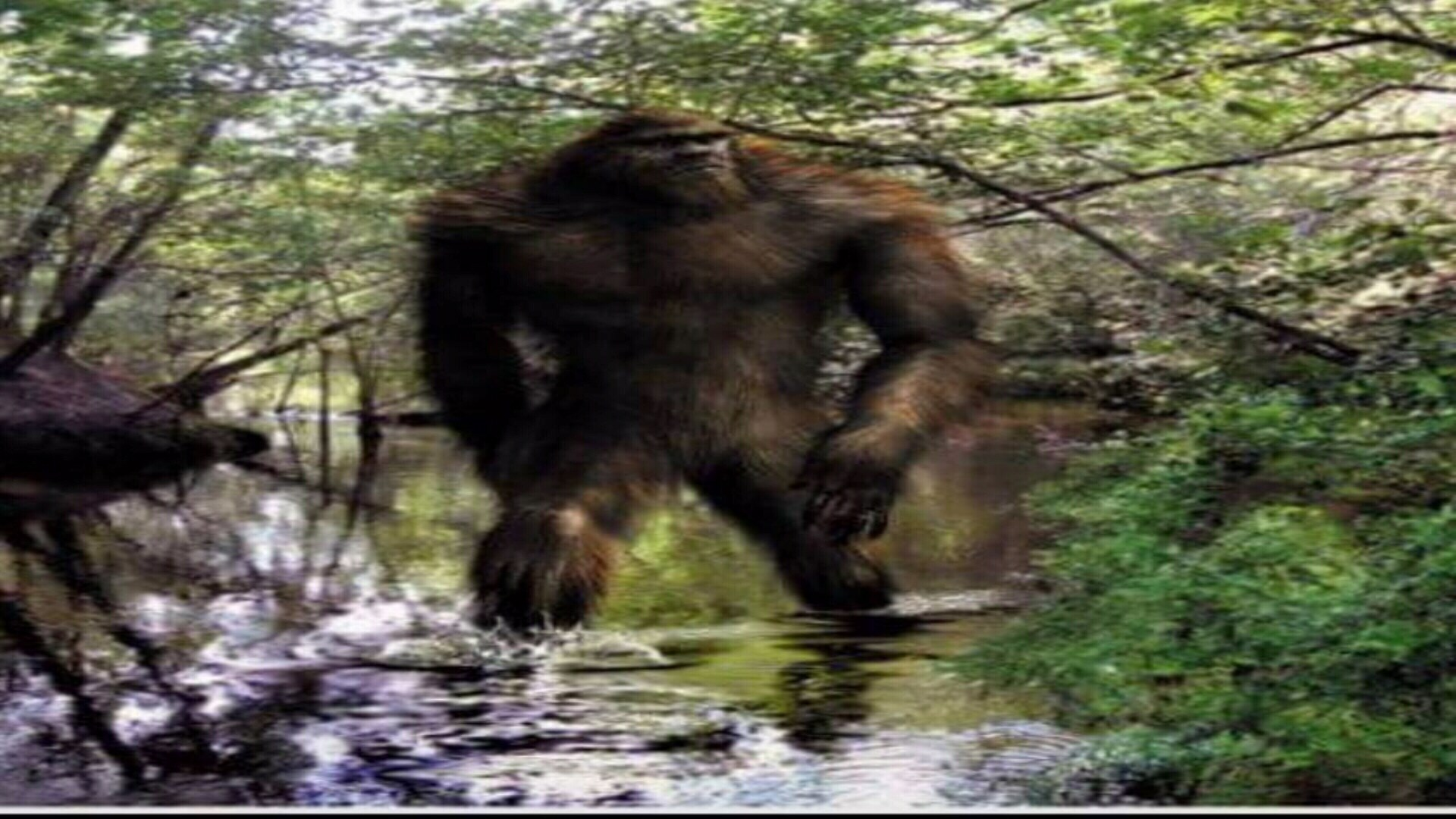 Bigfoot Pics, Fantasy Collection