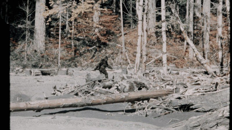 Amazing Bigfoot Pictures & Backgrounds