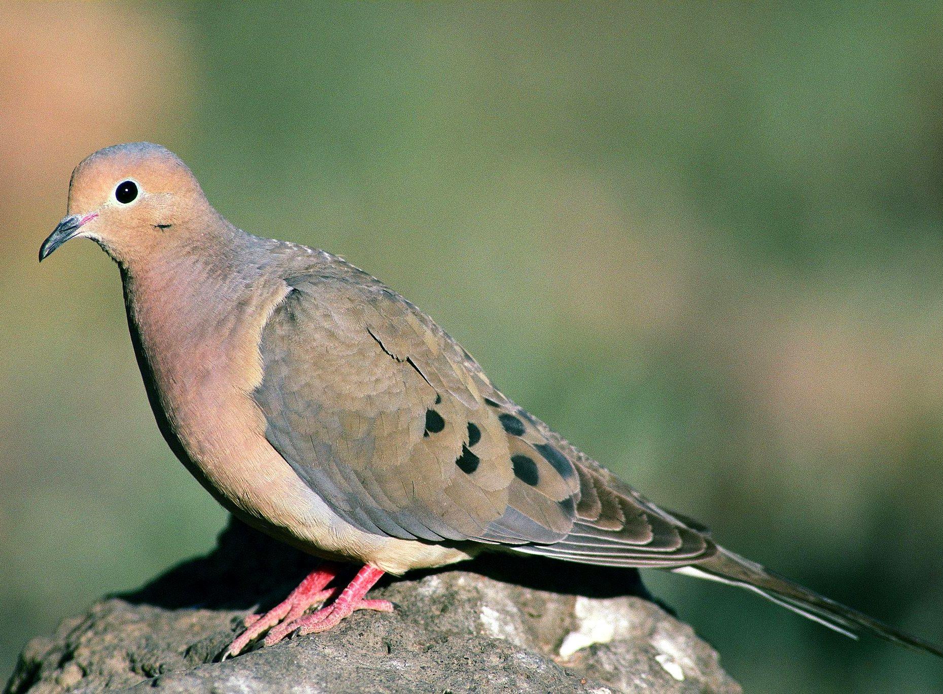 Nice Images Collection: Bird Desktop Wallpapers