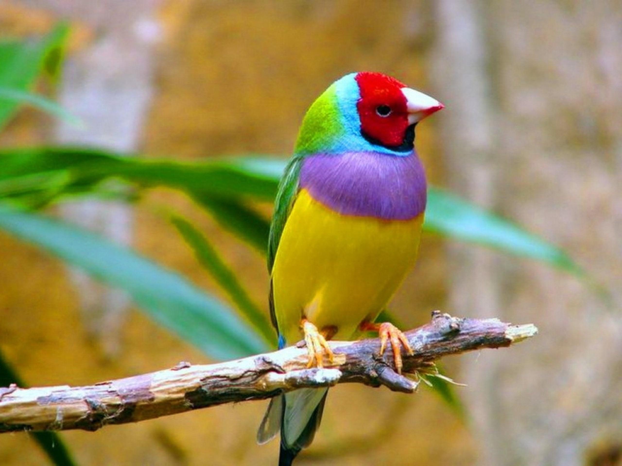 2560x1920 > Bird Wallpapers