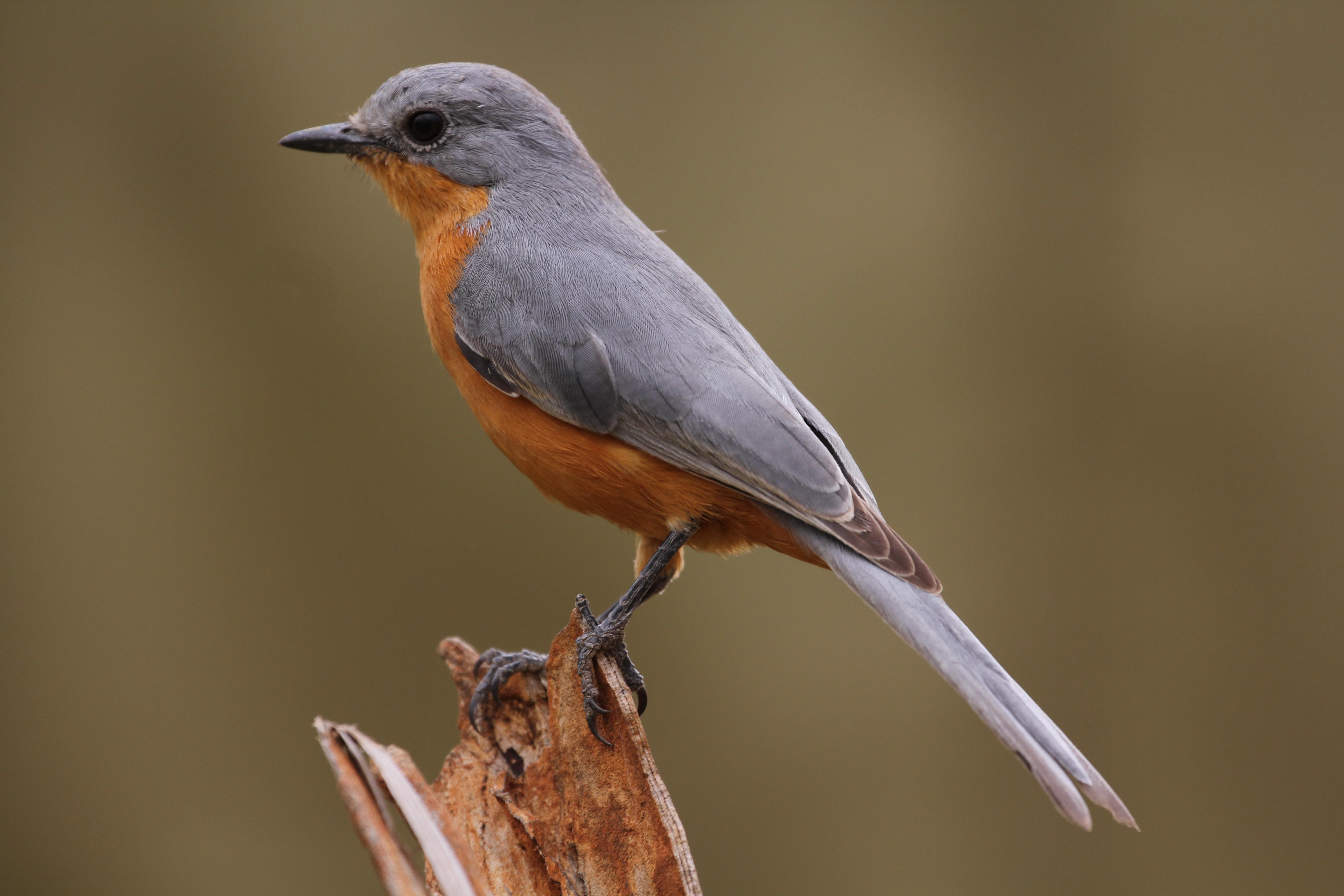 Bird Pics, Animal Collection