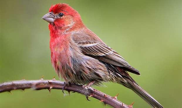 Bird Backgrounds, Compatible - PC, Mobile, Gadgets| 620x370 px