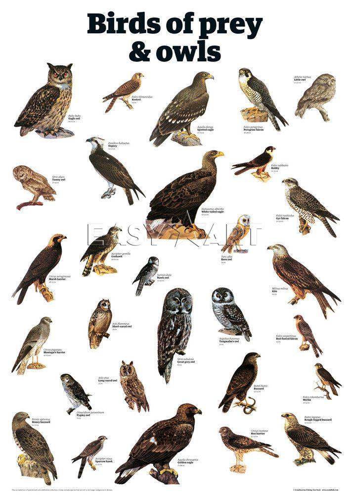 Birds Of Prey Wallpapers Comics Hq Birds Of Prey Pictures 4k Wallpapers 2019