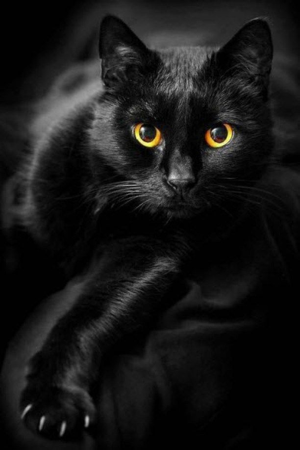 Black Cat Wallpapers Anime Hq Black Cat Pictures 4k Wallpapers 2019