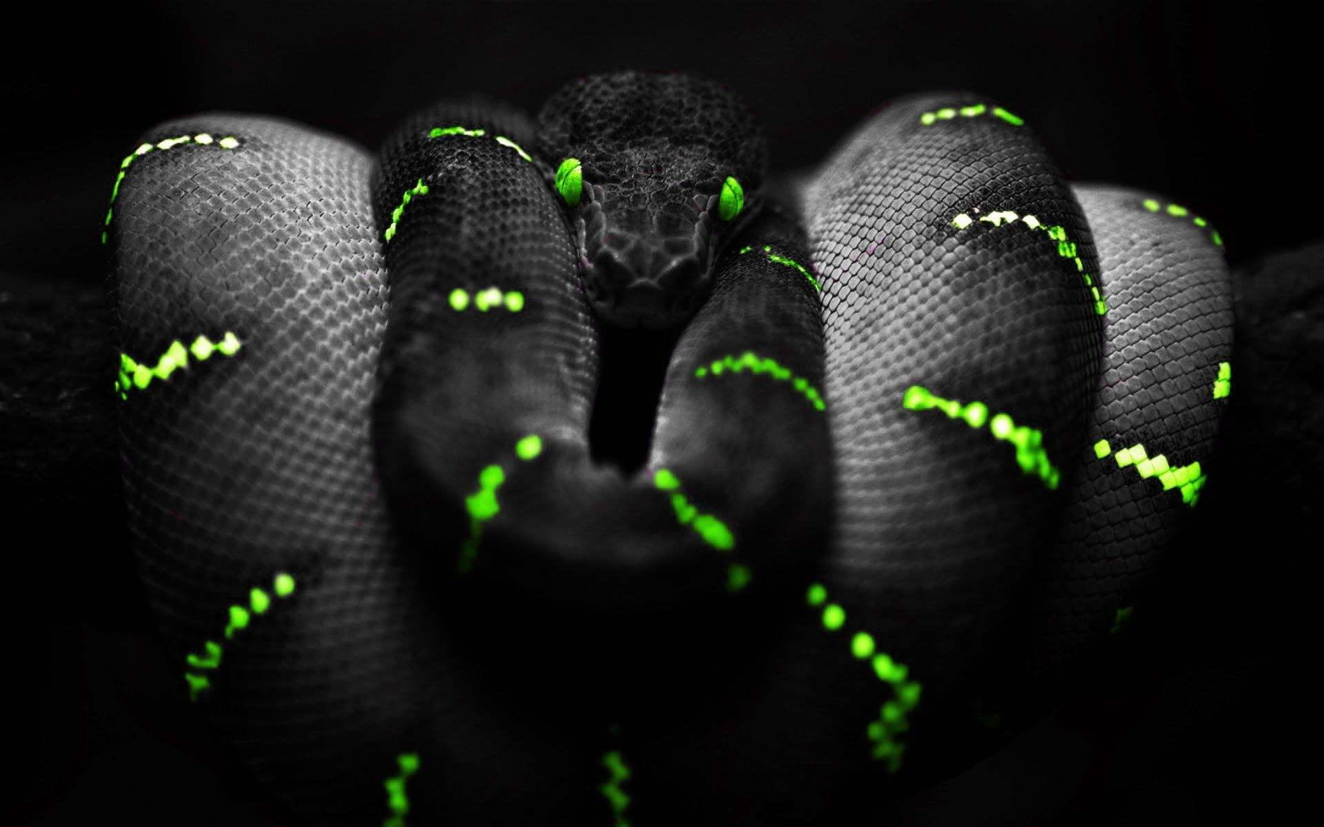 Black Mamba Wallpapers Animal Hq Black Mamba Pictures 4k Wallpapers 2019