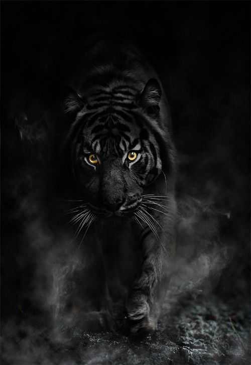 Black Tiger Wallpapers Comics Hq Black Tiger Pictures 4k Wallpapers 2019