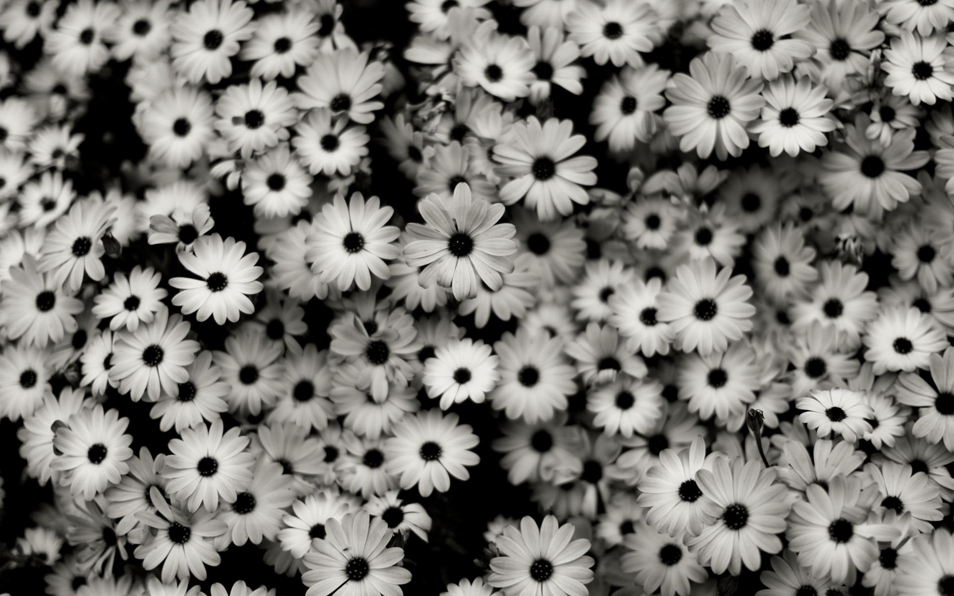 Black & White Backgrounds, Compatible - PC, Mobile, Gadgets| 1920x1200 px