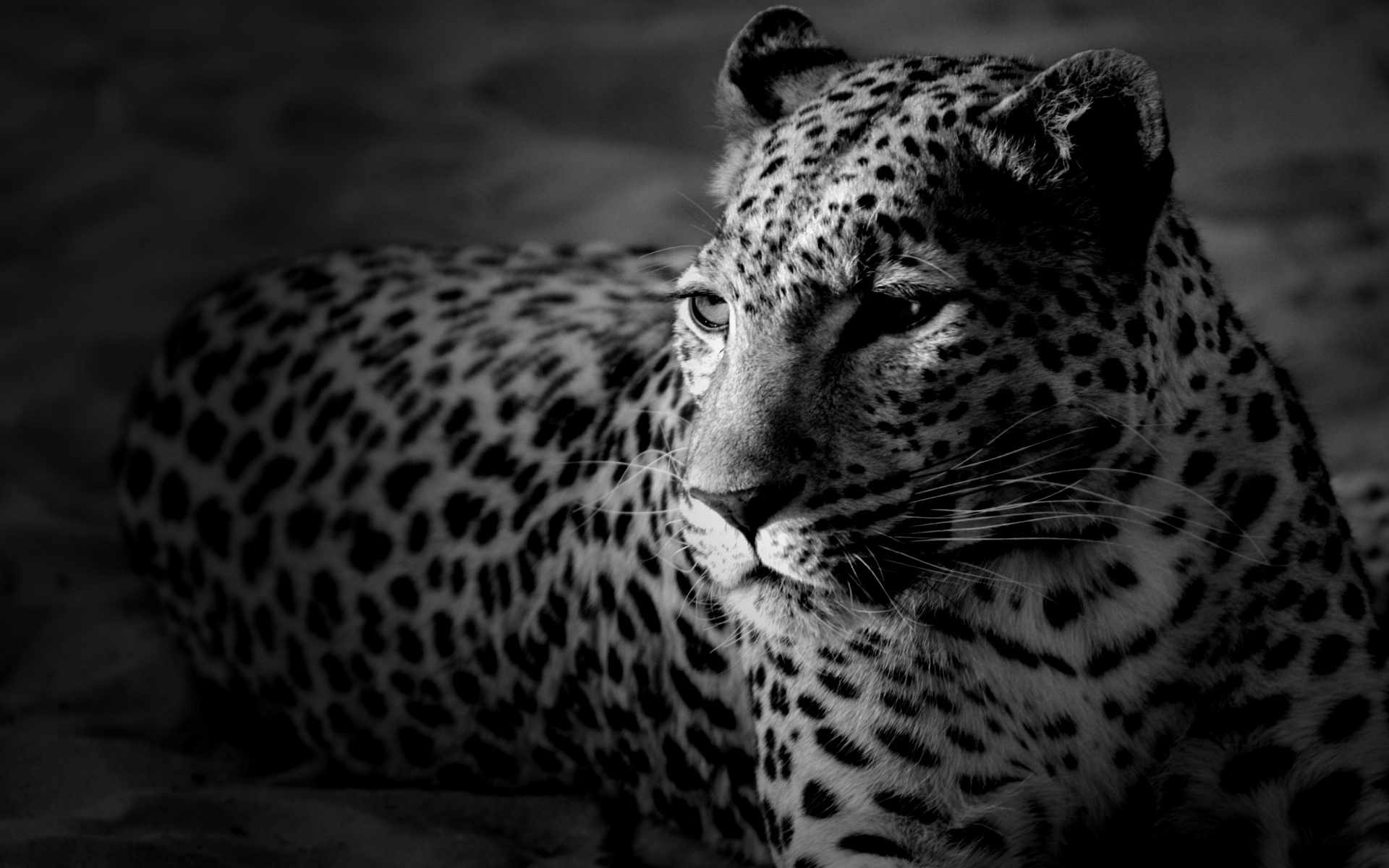 Black & White #7