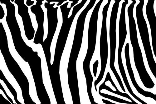 Black & White #13