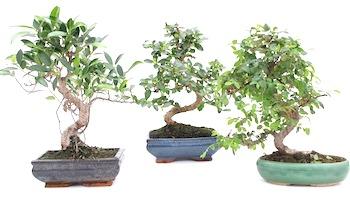 Bonsai HD wallpapers, Desktop wallpaper - most viewed