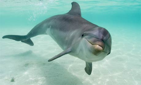 Dolphin Backgrounds, Compatible - PC, Mobile, Gadgets| 460x276 px