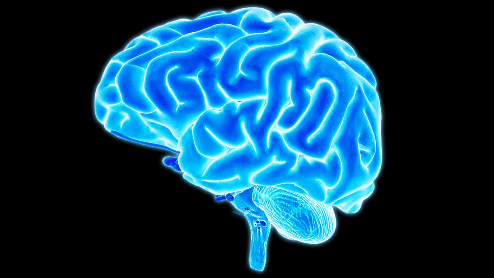 Brain HD wallpapers, Desktop wallpaper - most viewed