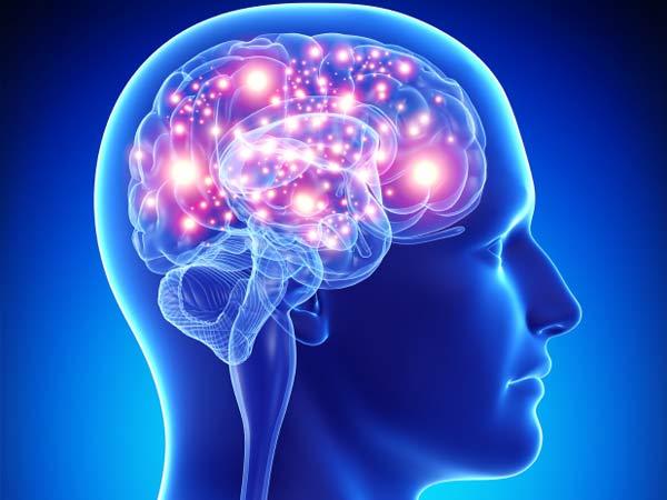600x450 > Brain Wallpapers
