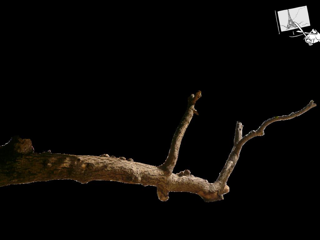 Branch HD wallpapers, Desktop wallpaper - most viewed