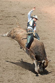 Bullriding High Quality Background on Wallpapers Vista