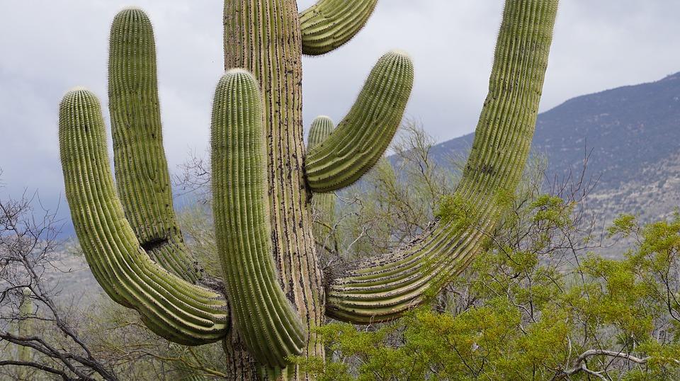 Cactus HD wallpapers, Desktop wallpaper - most viewed