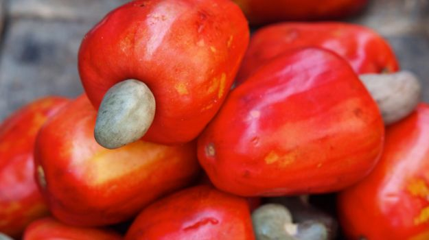 Images of Cashew | 625x350