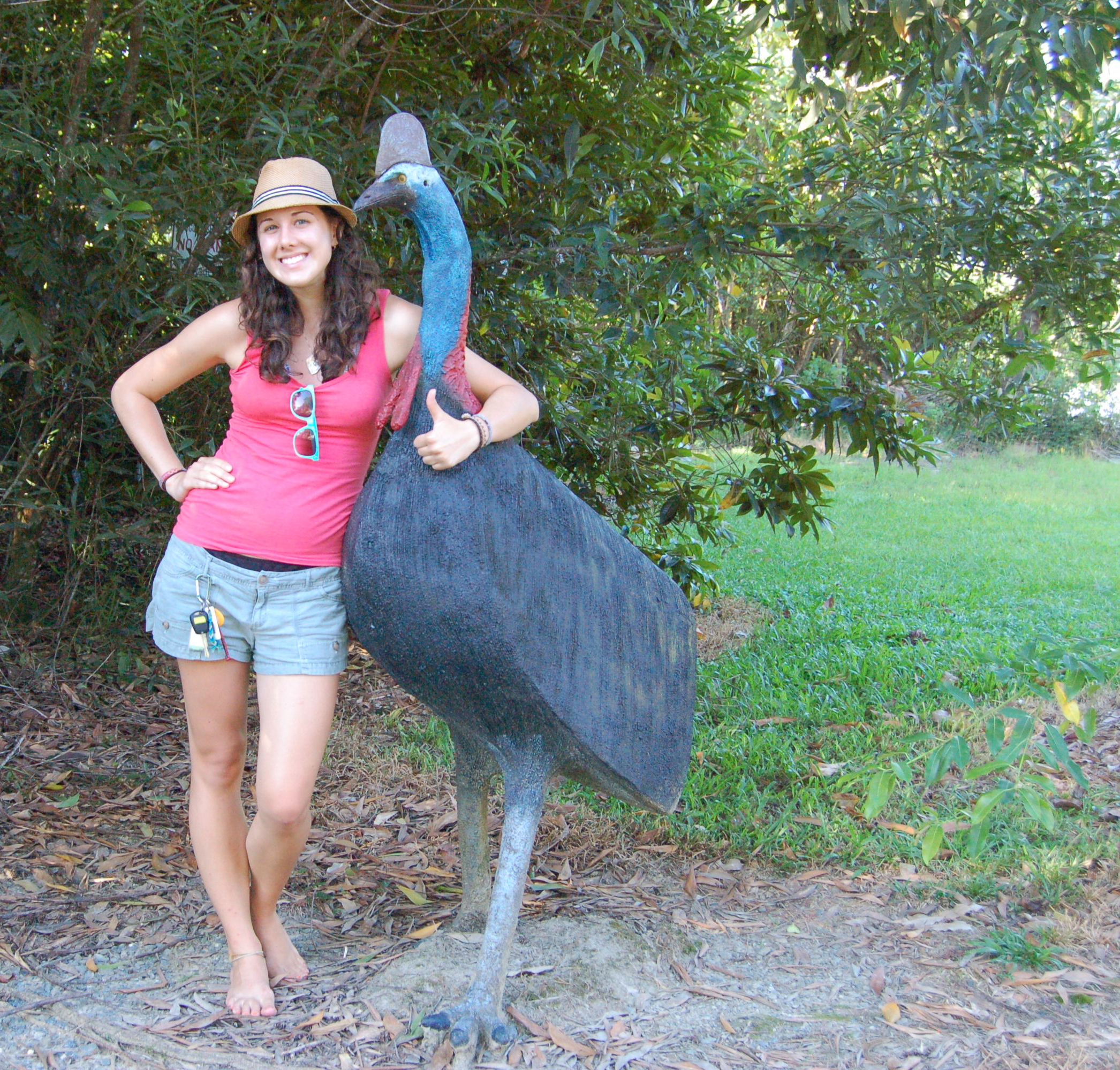 Amazing Cassowary Pictures & Backgrounds