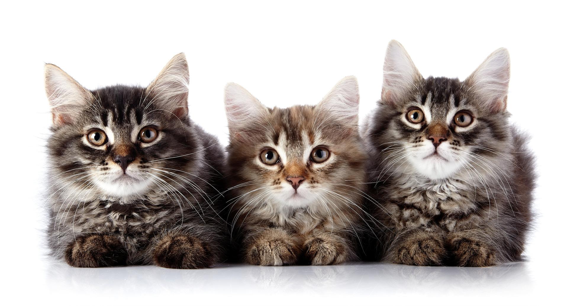 HQ Cat Wallpapers | File 559.8Kb
