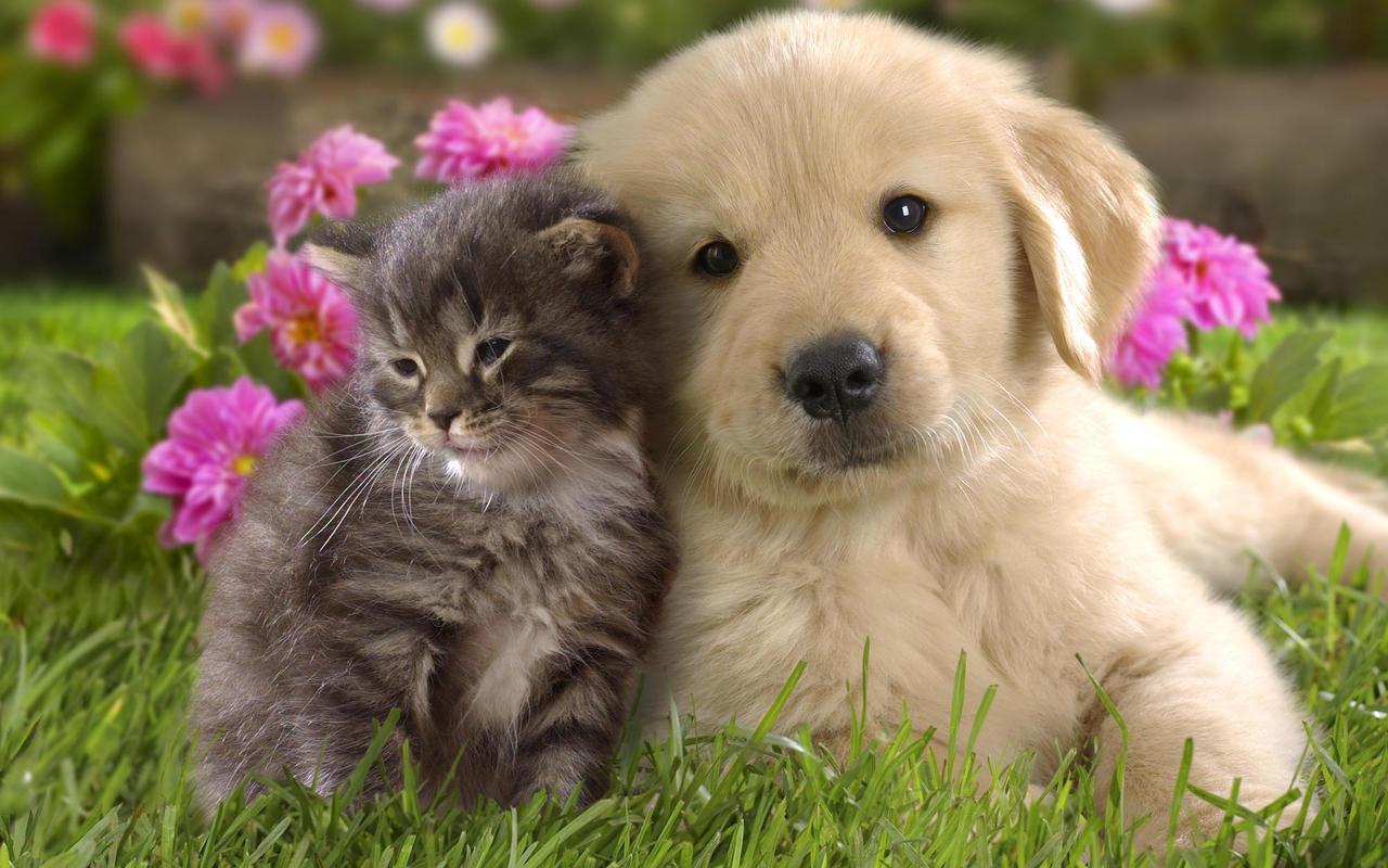 Cat & Dog HD wallpapers, Desktop wallpaper - most viewed