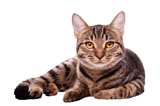 Cat High Quality Background on Wallpapers Vista