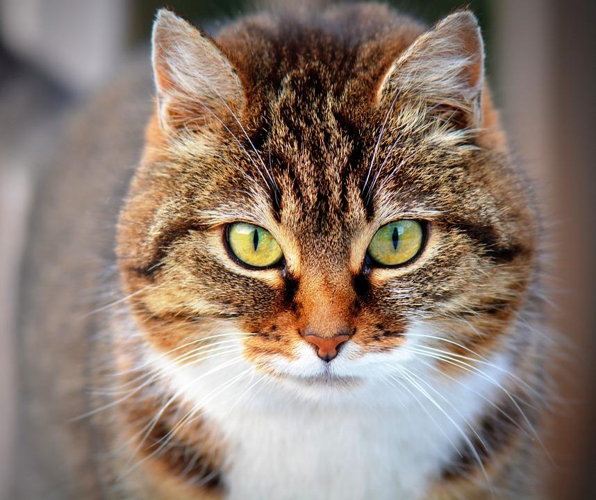 Images of Cat | 858x720