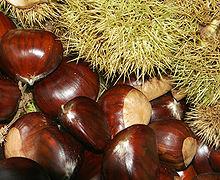 Nice Images Collection: Chestnut Desktop Wallpapers