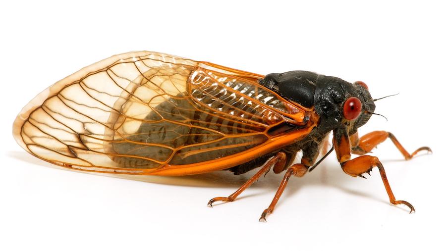 Cicada HD wallpapers, Desktop wallpaper - most viewed