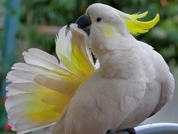Cockatoo HD wallpapers, Desktop wallpaper - most viewed