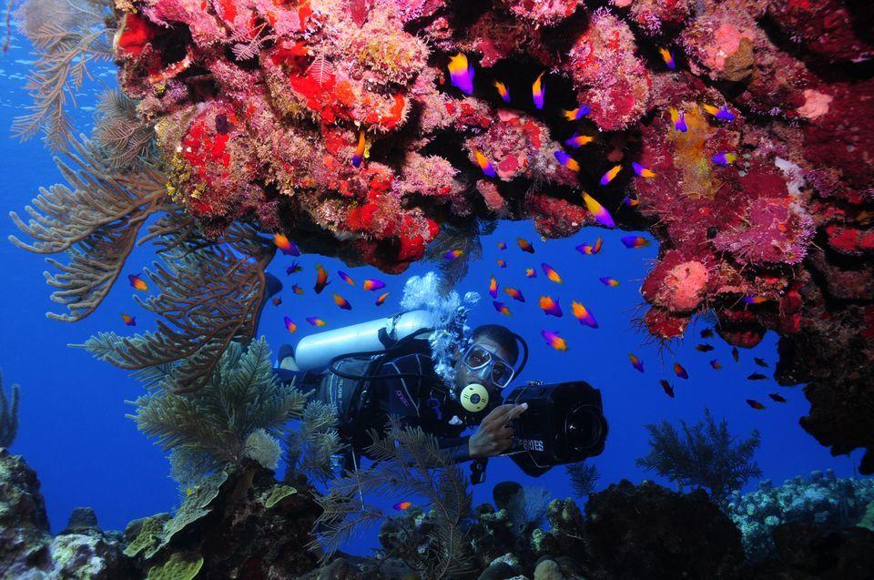 Coral HD wallpapers, Desktop wallpaper - most viewed