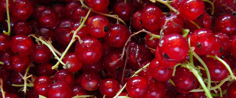 Images of Currants | 800x335