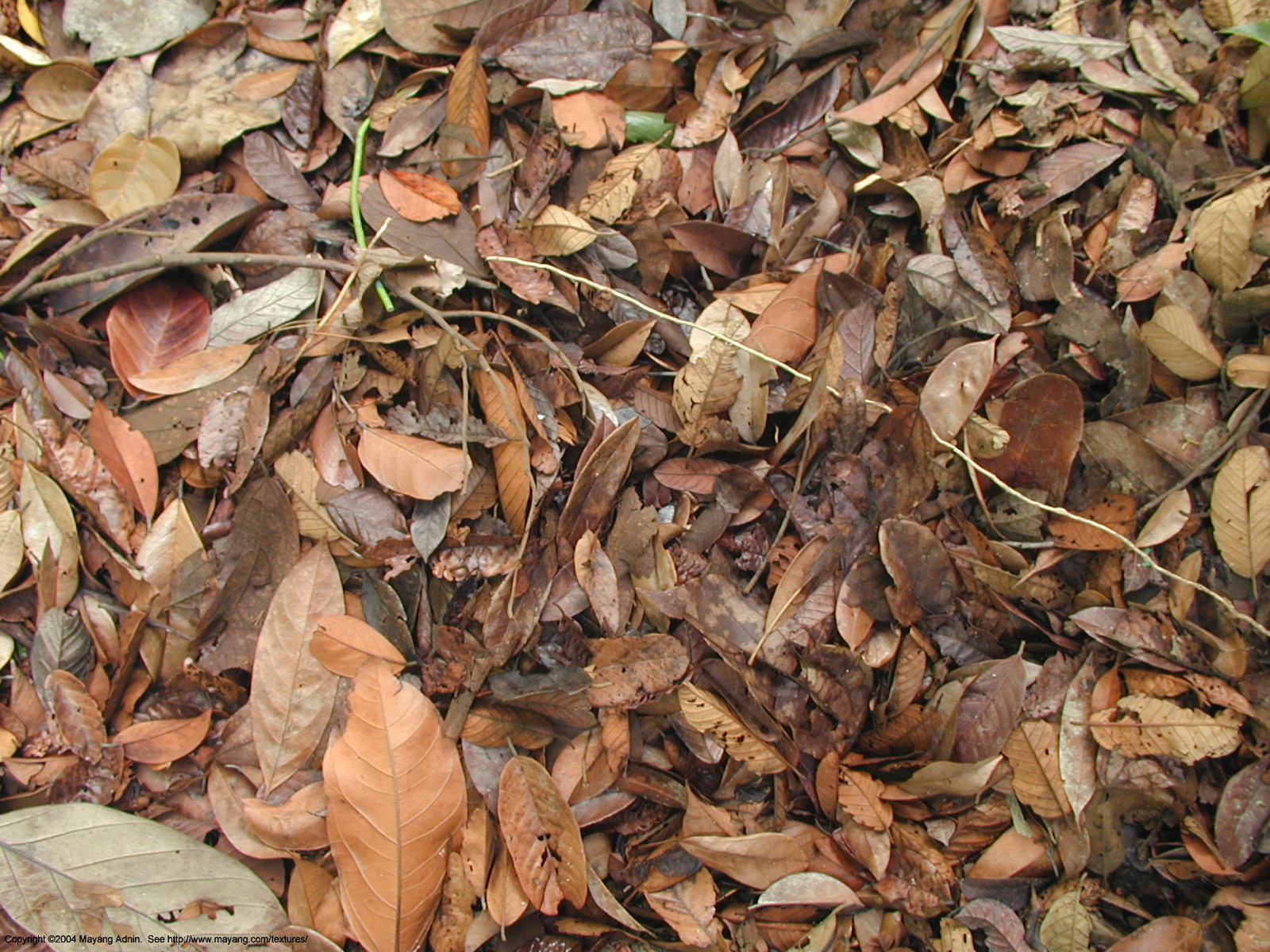 Nice Images Collection: Dead Leaves Desktop Wallpapers