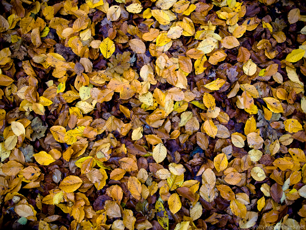 Amazing Dead Leaves Pictures & Backgrounds