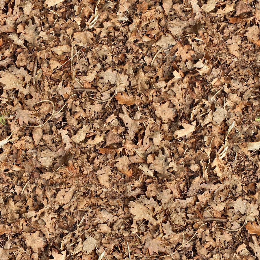 HQ Dead Leaves Wallpapers | File 447.63Kb