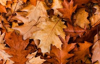 HQ Dead Leaves Wallpapers | File 92.96Kb