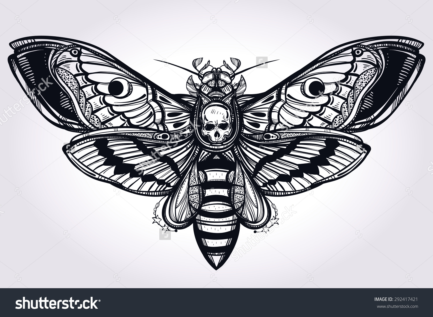 Nice Images Collection: Deaths Head Moth Desktop Wallpapers