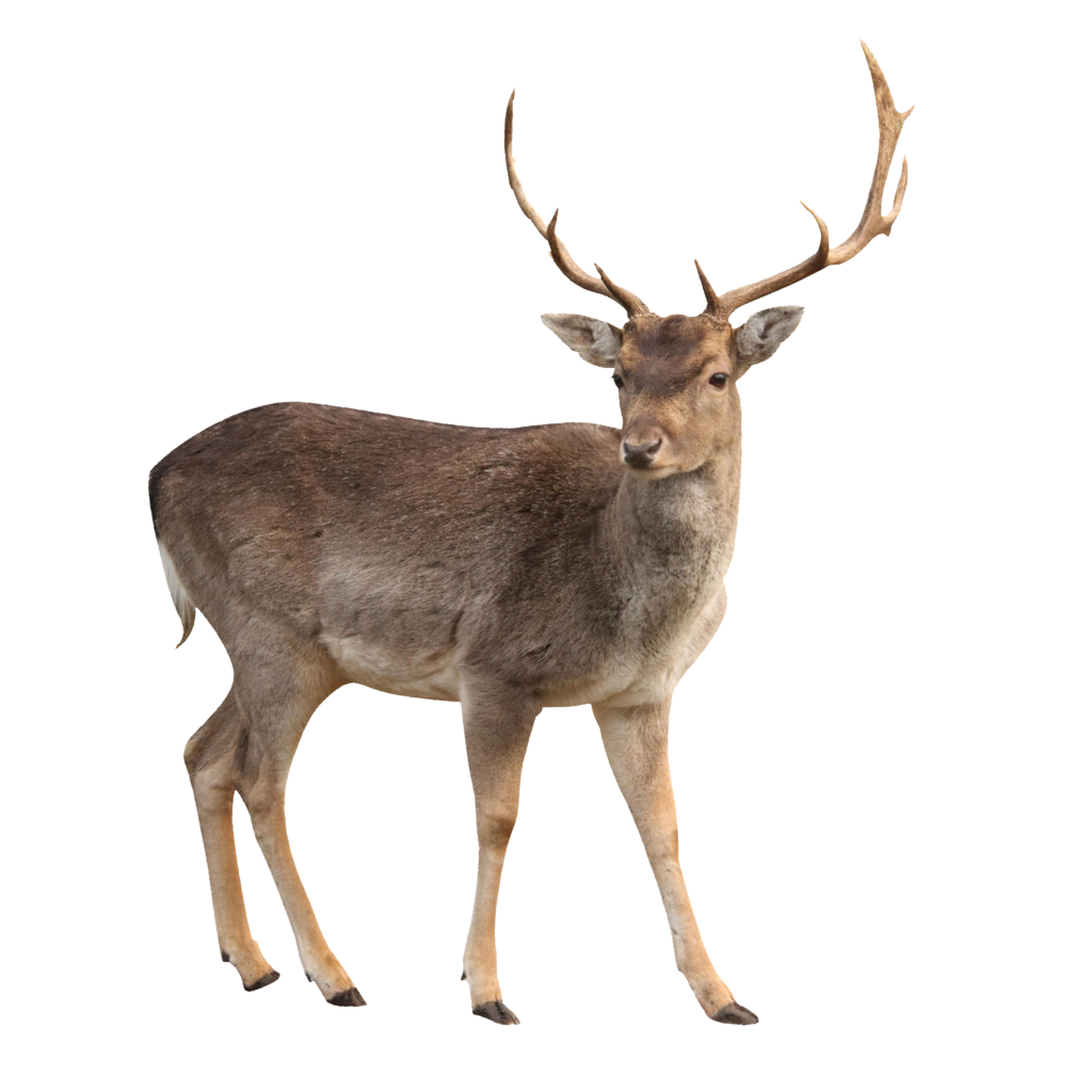 Nice wallpapers Deer 1024x1024px