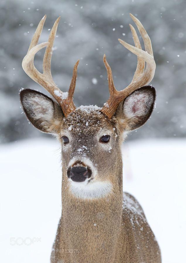 Nice Images Collection: Deer Desktop Wallpapers