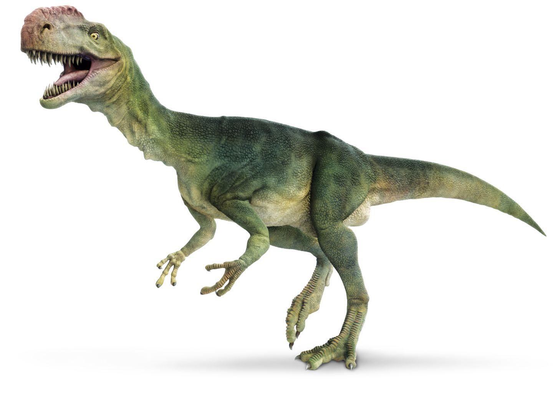 Dinosaur Backgrounds, Compatible - PC, Mobile, Gadgets  1440x1052 px