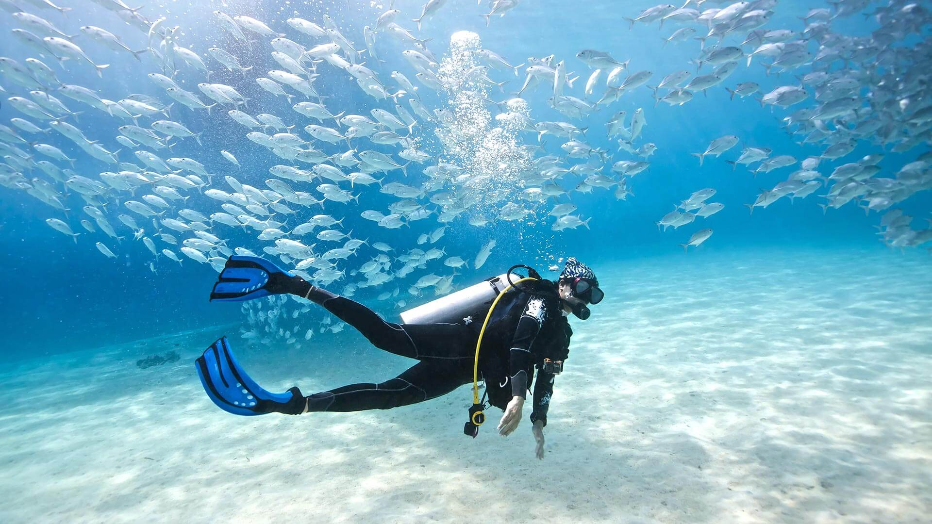 Nice Images Collection: Diving Desktop Wallpapers