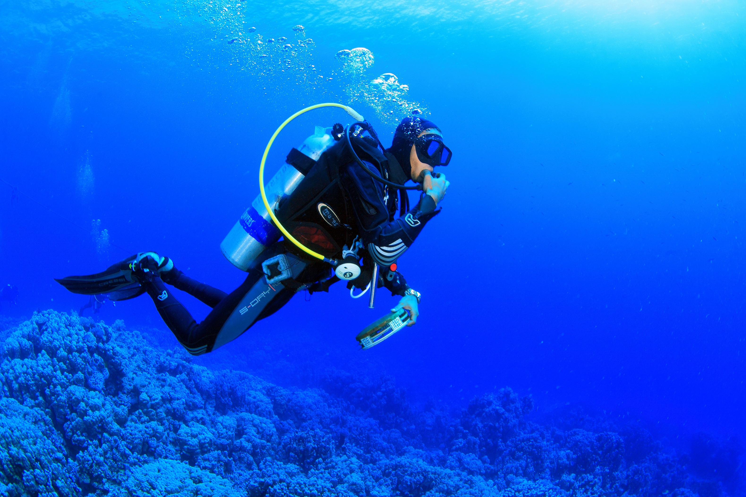 Diving Pics, Artistic Collection