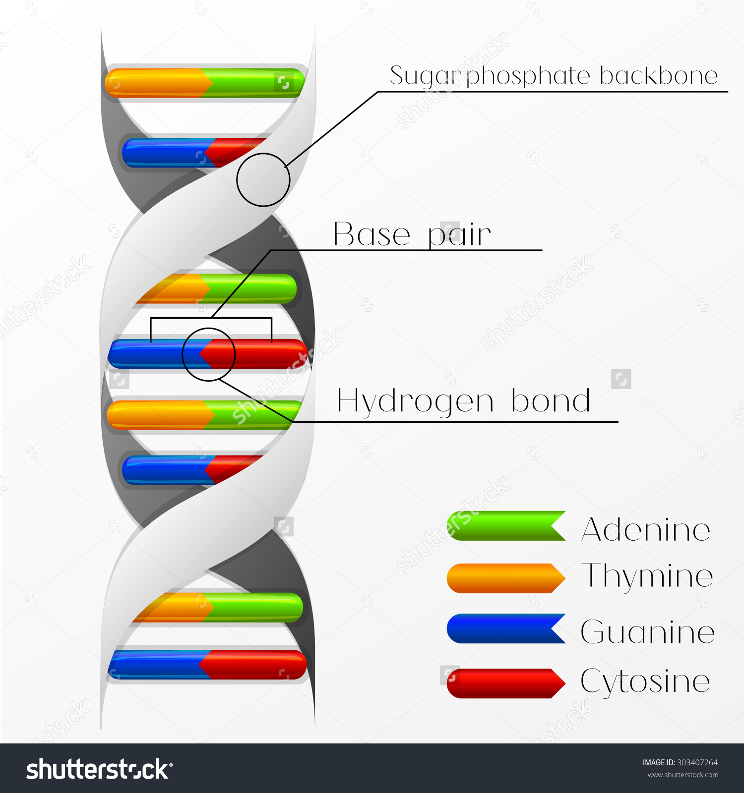 DNA Structure Backgrounds on Wallpapers Vista