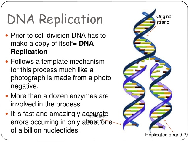 Amazing DNA Structure Pictures & Backgrounds