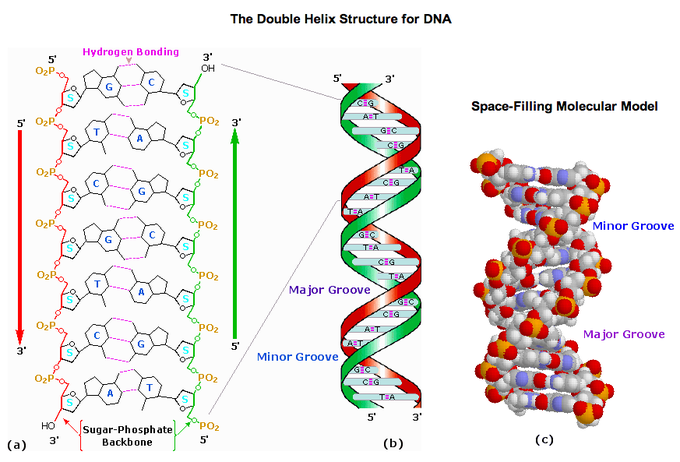 Nice Images Collection: DNA Structure Desktop Wallpapers