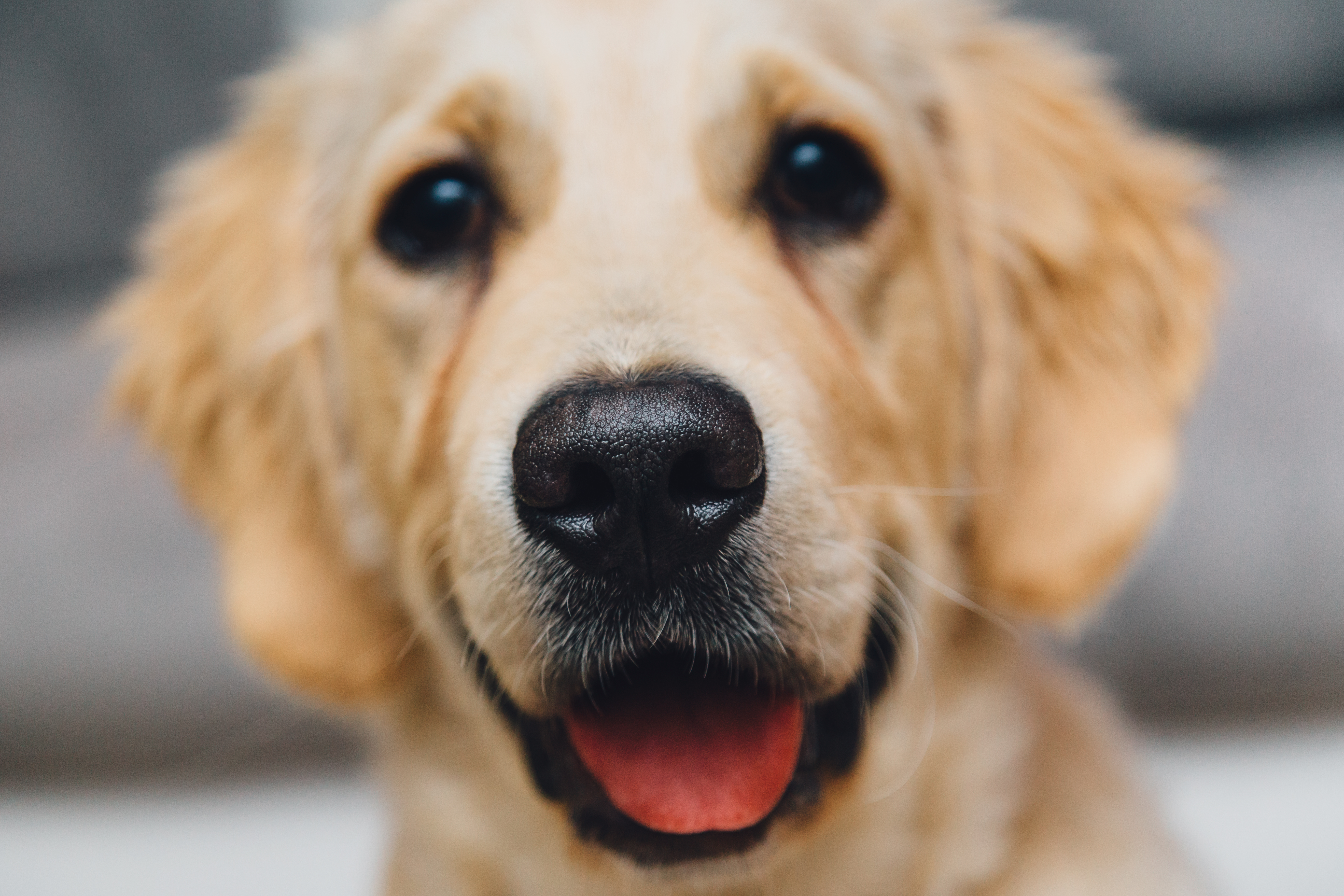 Dog High Quality Background on Wallpapers Vista