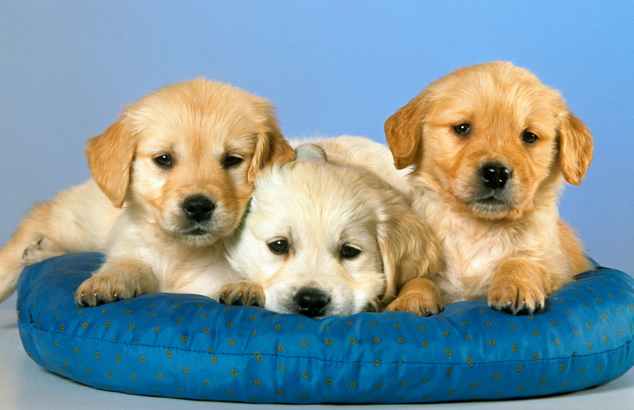 Dog Backgrounds, Compatible - PC, Mobile, Gadgets| 2048x1325 px